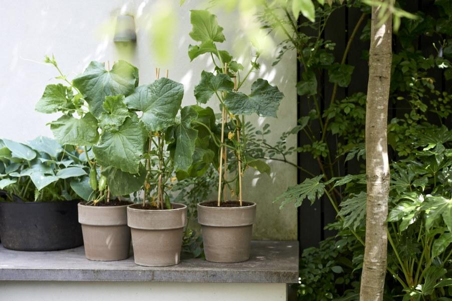 groenteplanten in de tuin - mooiwatplantendoen #tuin #terras #groenteplanten #tuininspiratie #mooiwatplantendoen