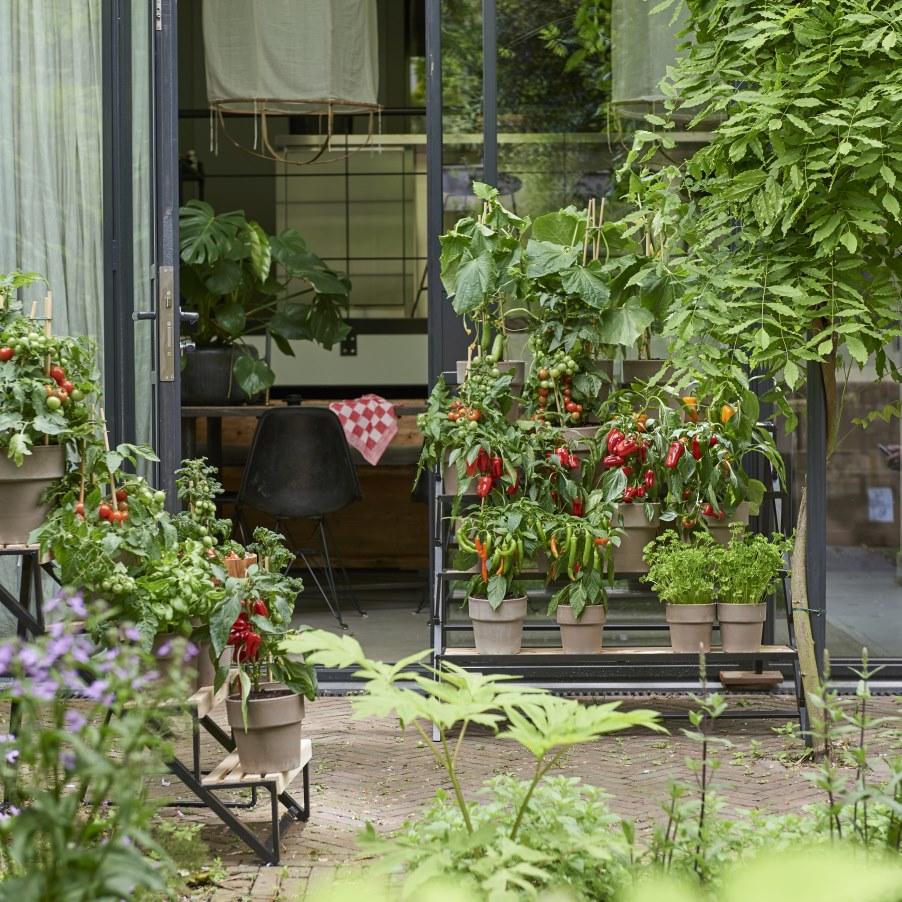 Vertical gardening - groenteplanten in de tuin - mooiwatplantendoen #tuin #terras #groenteplanten #tuininspiratie #mooiwatplantendoen