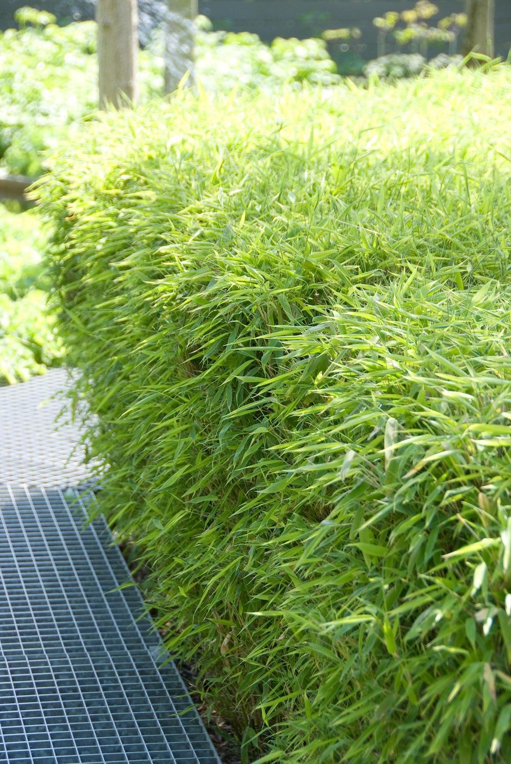 Tuinplanten die een positieve en lkalmerende invloed hebben #tuinplanten #tuin #balkon #mooiwatplantendoen #bamboe