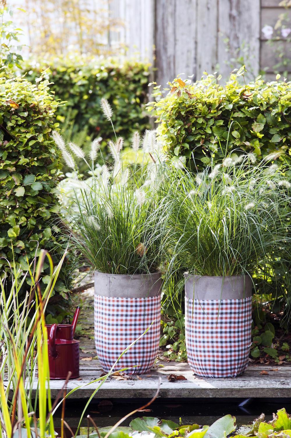 Tuinplanten die een positieve en kalmerende invloed hebben #tuinplanten #tuin #balkon #mooiwatplantendoen #siergrassen