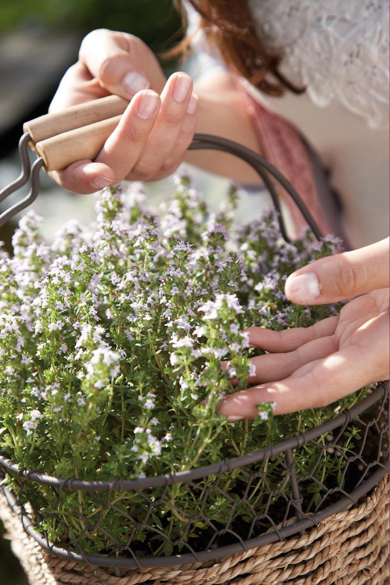 Tuinplanten die een positieve en kalmerende invloed hebben #tuinplanten #tuin #balkon #mooiwatplantendoen #Tijm