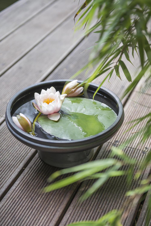 Tuinplanten die een positieve en kalmerende invloed hebben #tuinplanten #tuin #balkon #mooiwatplantendoen #waterlelie
