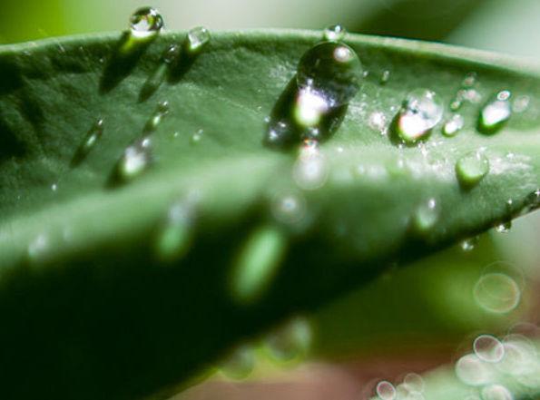 Plantenvoeding en voorzorging voor planten in de tuin en in huis