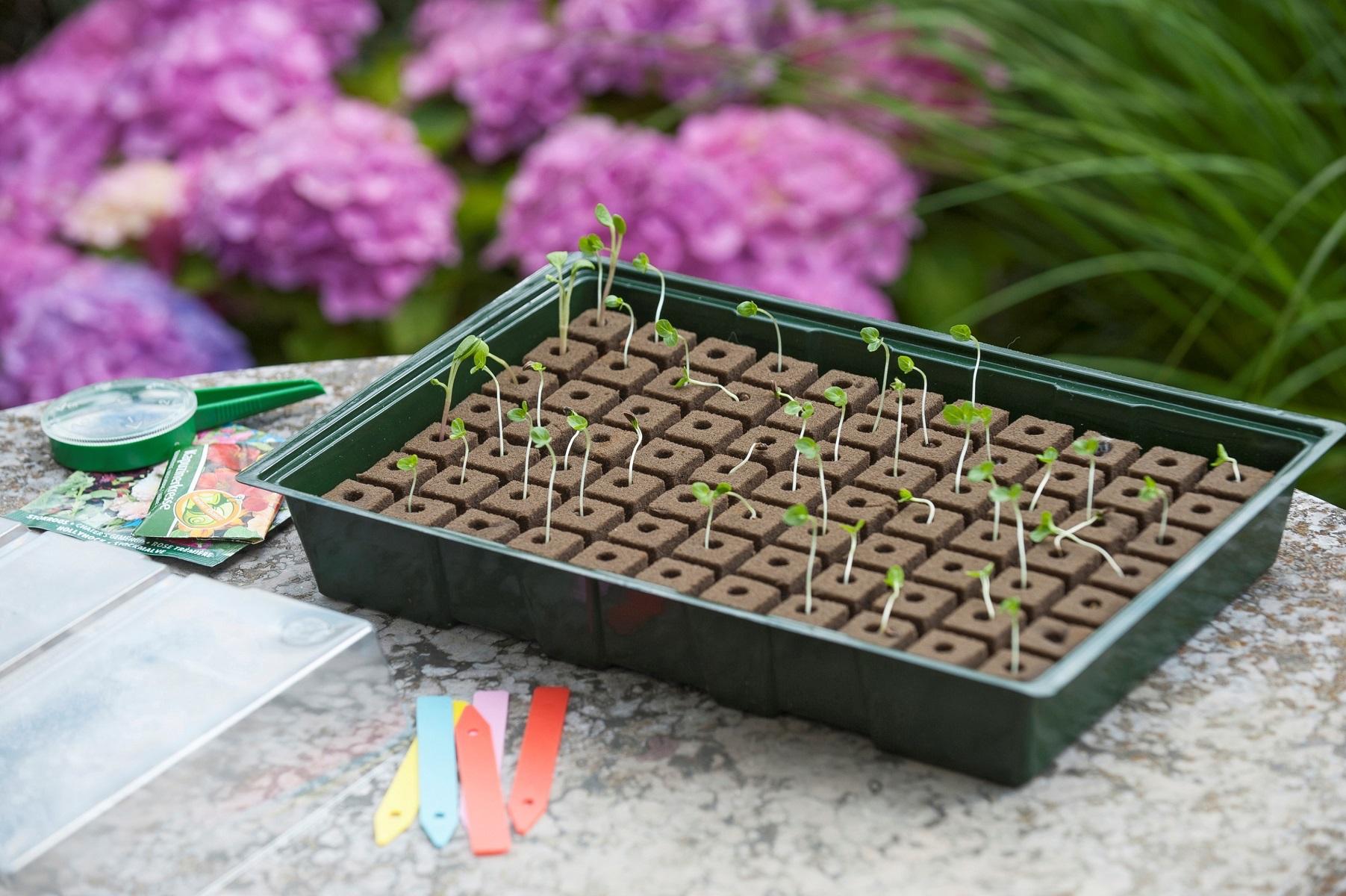 Kruidentuin zelf kweken. Kweekbak hydrocultuur #kweekbak #kruidentuin #tuin #tuinidee