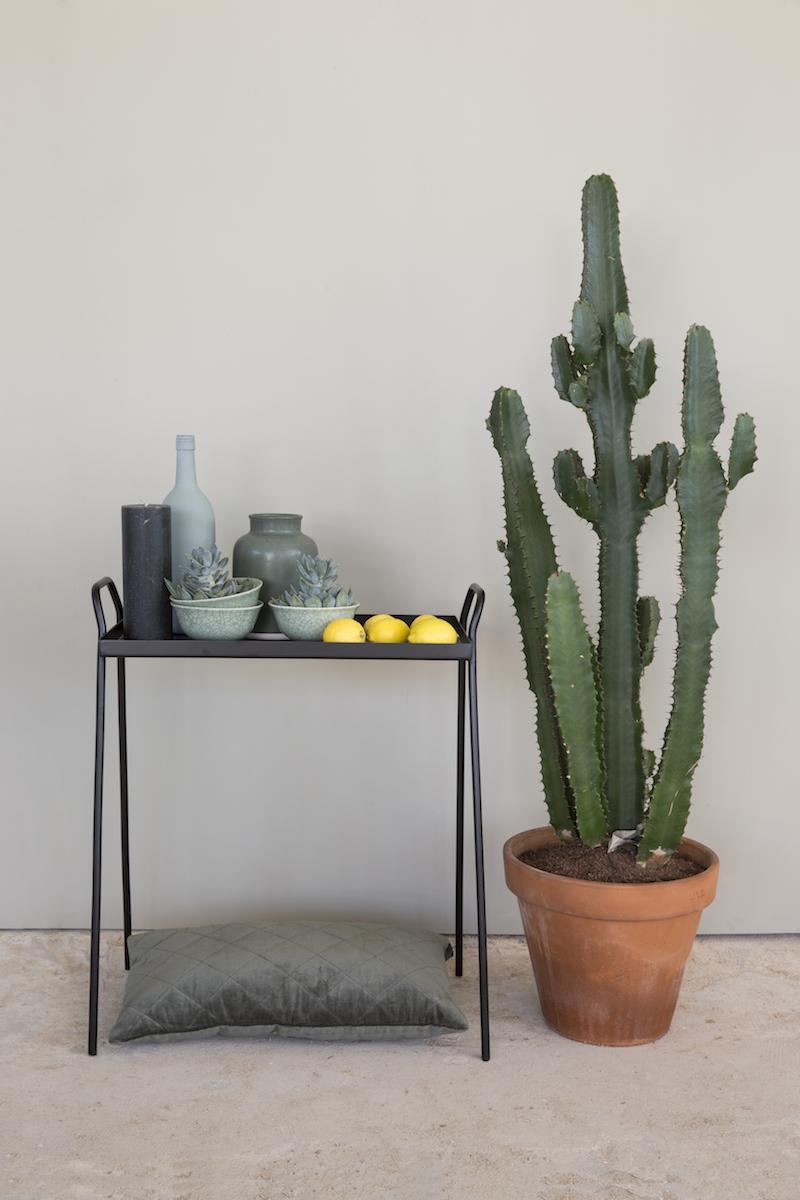 Interieur met cactus en olijfgroene krijtverf van Amazona