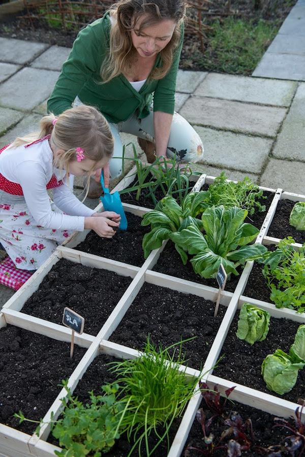 Groenten uit eigen tuin met Pokon
