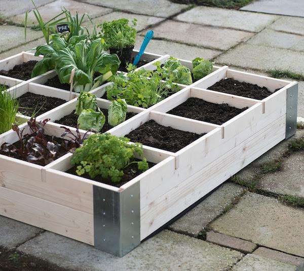 Groenten uit eigen tuin Pokon
