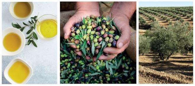 Boek over olijfolie