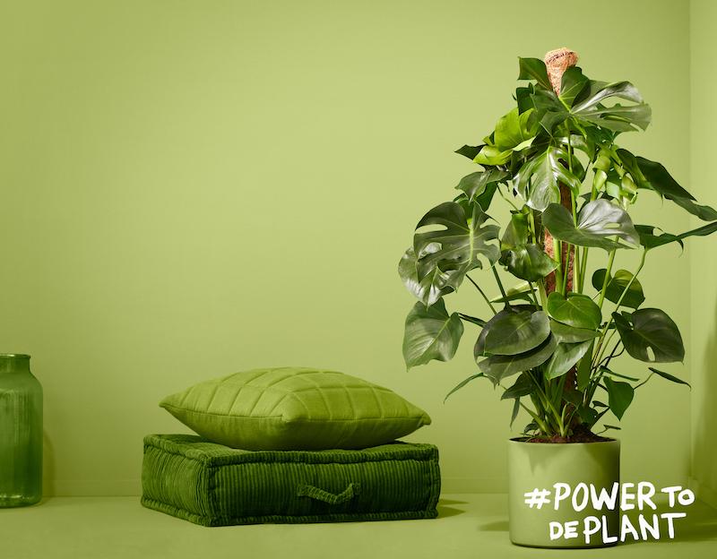 5 tips voor de verzorging van groene planten in huis #groeneplanten #tips #verzorging #plantenverzorging