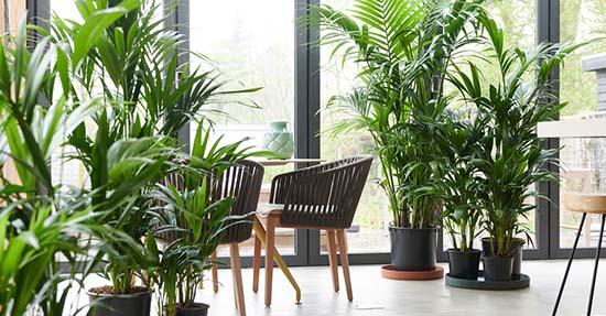 Style je interieur met de woonplant van januari #interieur #interieurinspiratie #kentiapalm #groen #groeninhuis #planten