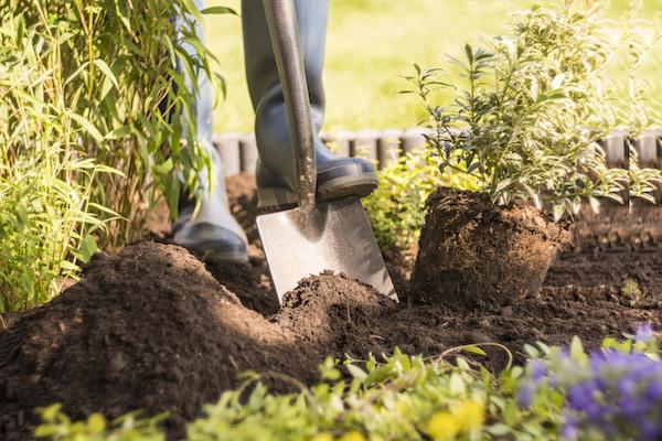 Pokon aanplantgrond bio