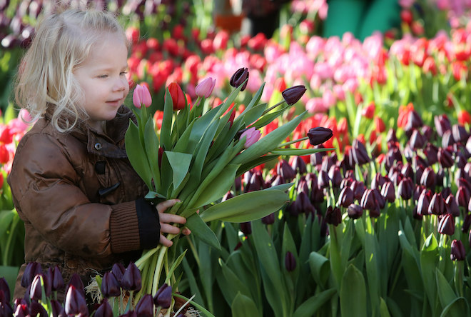 Tulpen plukken Amsterdam