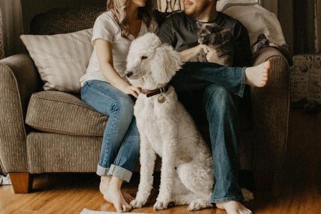 Verhuizen met je huisdier